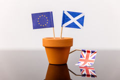 Roślina garnek z szkocką i europejską flaga fotografia stock