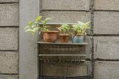 Roślina garnka drzewo na półkach Fotografia Royalty Free