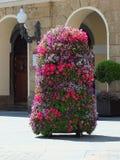 Roślina garnki CÃ ¡ diz Zdjęcie Royalty Free