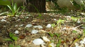 Roślina glebowy las fotografia royalty free