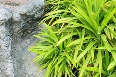Roślina i kamień obraz royalty free