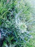 roślina kłująca Fotografia Royalty Free