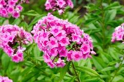 Roślina kwiatów greenery park maluje lato jesień 2 Obrazy Stock