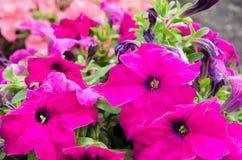 Roślina kwiatów greenery park maluje lato jesień 4 Fotografia Stock