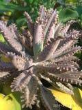 Roślina, kwiat roślina, drzewny kosmetyk zdjęcie stock