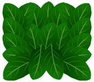Roślina liście Obrazy Royalty Free