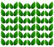 Roślina liście Zdjęcie Royalty Free