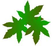 Roślina liście Fotografia Stock
