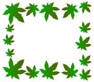 Roślina liście Zdjęcie Stock