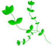 Roślina liście Zdjęcia Royalty Free