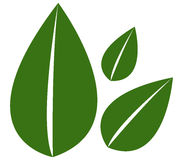 Roślina liście Obraz Stock