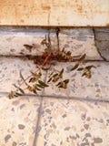 Roślina między płytkami Fotografia Stock