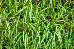 Roślina na ścianie jako tło Obraz Royalty Free