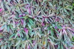 Roślina na ścianie jako tło Zdjęcia Stock