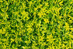 Roślina na ścianie jako tło Obraz Stock