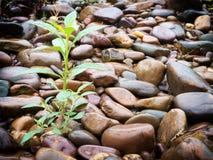 Roślina na kamieniach obraz stock