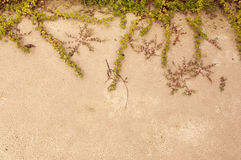 Roślina na piasek plaży Fotografia Stock