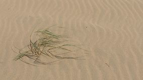 Roślina na piasek plaży zbiory wideo