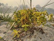 Roślina na piasku na riverbank fotografia royalty free