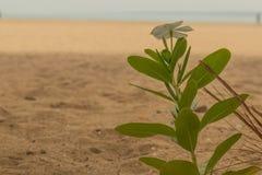 Roślina na plaży Obraz Stock
