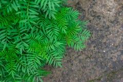 Roślina na podłoga, widok od wierzchołka Selekcyjna ostrość Fotografia Royalty Free