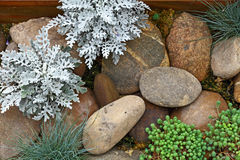 Roślina na skała kamieniu Obrazy Royalty Free