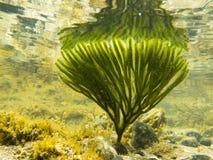 roślina odbijał gałęzatki strzału powierzchni underwater Fotografia Stock