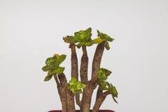 Roślina odizolowywająca Fotografia Stock