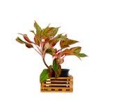 Roślina odizolowywająca Fotografia Royalty Free