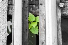 Roślina pod koleją fotografia royalty free