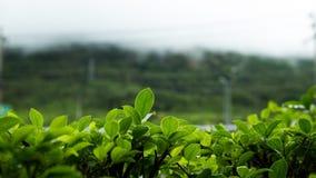 Roślina przed górą Obraz Royalty Free