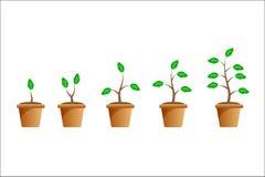 Roślina przyrost reżyseruje pojęcie, wektor obrazy stock