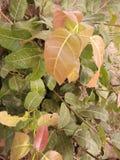 Roślina różny wzrok zdjęcie royalty free