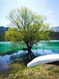 Roślina wśrodku jeziora w Agliano jacie w Gramolazzo, LU Zdjęcia Royalty Free