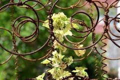 Roślina wśrodku kurenda drutu obrazy stock