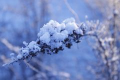 Roślina w śniegu zdjęcie stock