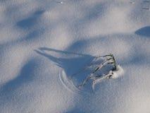 Roślina w śniegu Zdjęcia Royalty Free