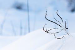Roślina w śniegu Fotografia Stock