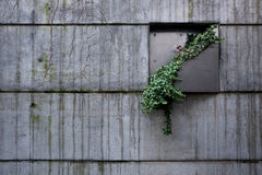 Roślina w betonowej ścianie obraz royalty free