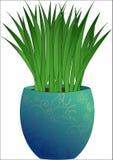 Roślina w garnka projekcie obrazy stock