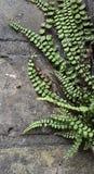 Roślina w kamiennej ścianie Fotografia Royalty Free