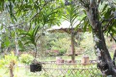 Roślina w ogródzie Obrazy Royalty Free