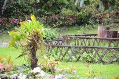Roślina w ogródzie Obraz Royalty Free