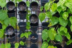 Roślina w plastikowym garnka obwieszeniu na ścianie Obraz Stock