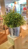 Roślina w pokoju Fotografia Stock