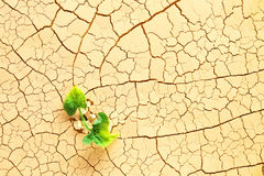 Roślina w pustyni Fotografia Stock