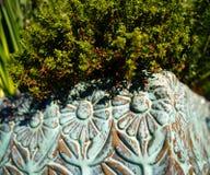 Ro?lina w zielonym kwiatu garnku fotografia royalty free