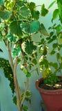 Roślina wp8lywy na słońcu obraz stock