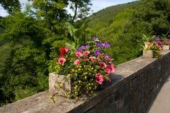 roślina wszystkie różny miły garnek Zdjęcia Stock