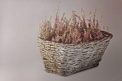 Roślina z małymi liśćmi i menchiami kwitnie w koszu Zdjęcia Royalty Free